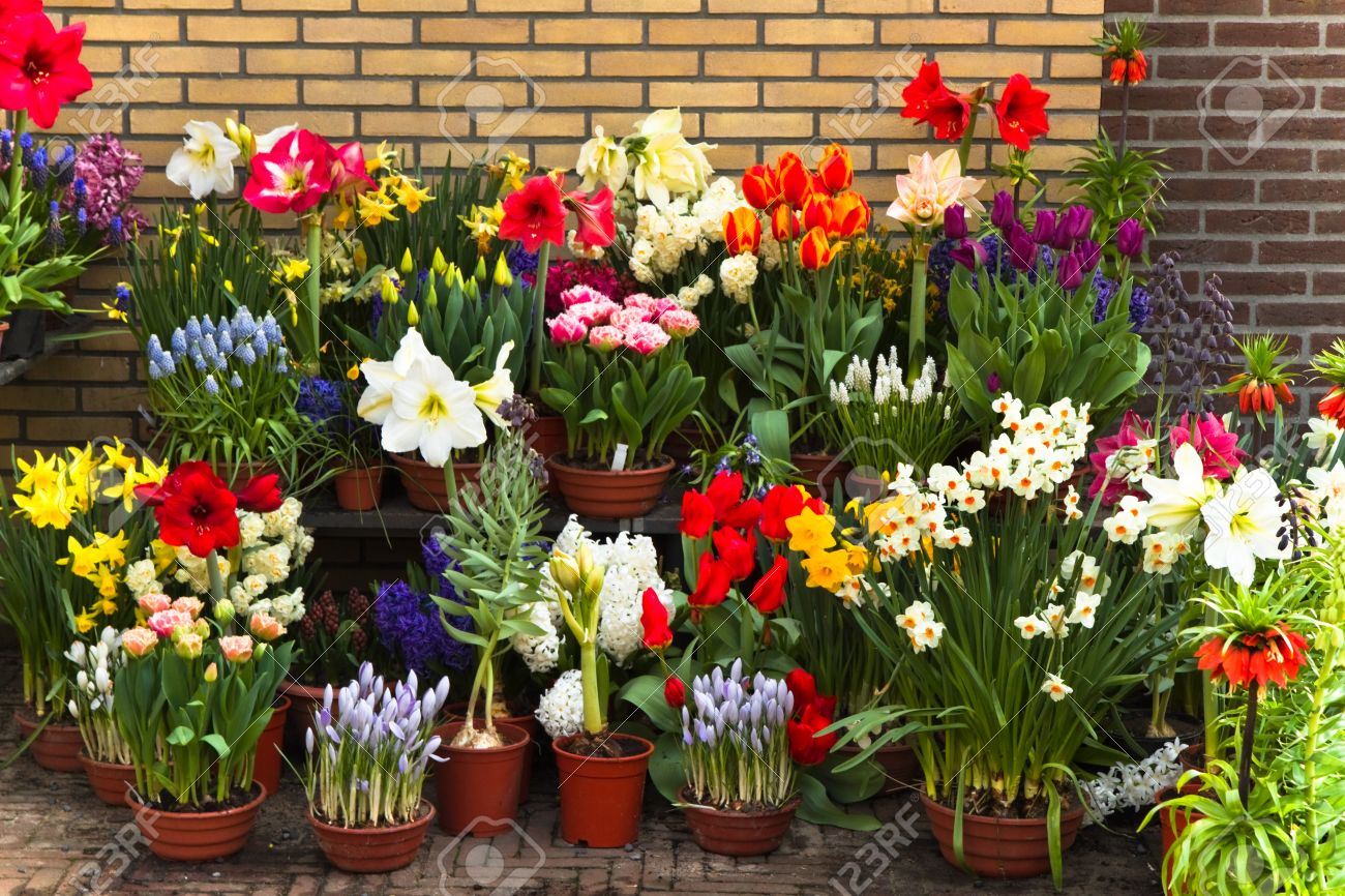 flowers for pots  flower, Natural flower