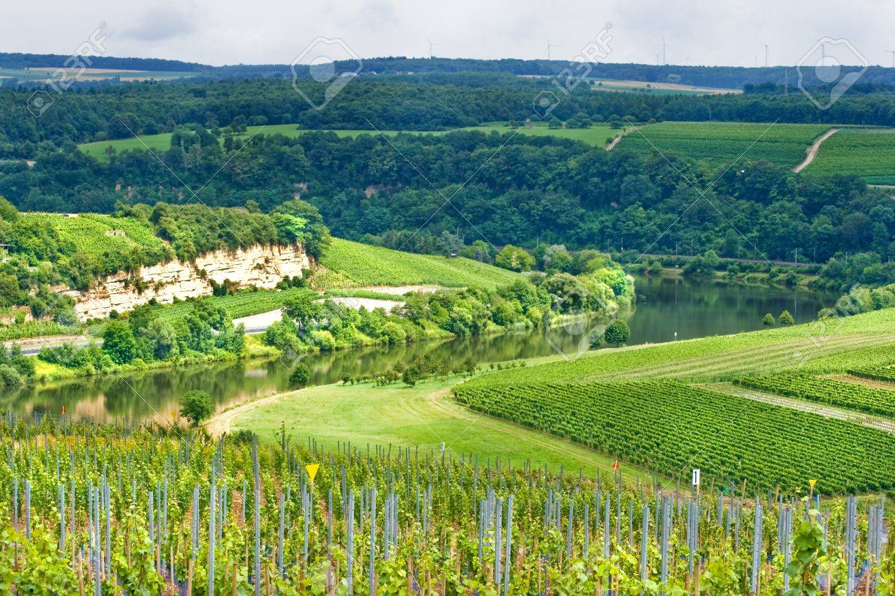 Green hills with vineyards along the European river Mosel in summer Stock Photo - 9552344