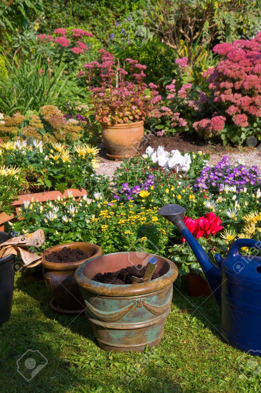 Plante A Planter En Septembre jardin avec fleurs d'automne en septembre - planter de nouvelles plantes  dans des pots et des boîtes
