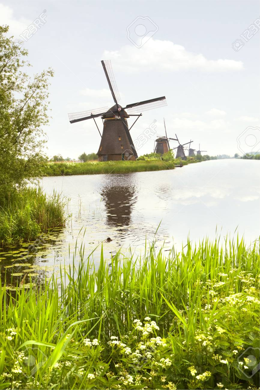 Row of windmills in Kinderdijk, the Netherlands in spring with blooming Cow parsley Stock Photo - 13773951