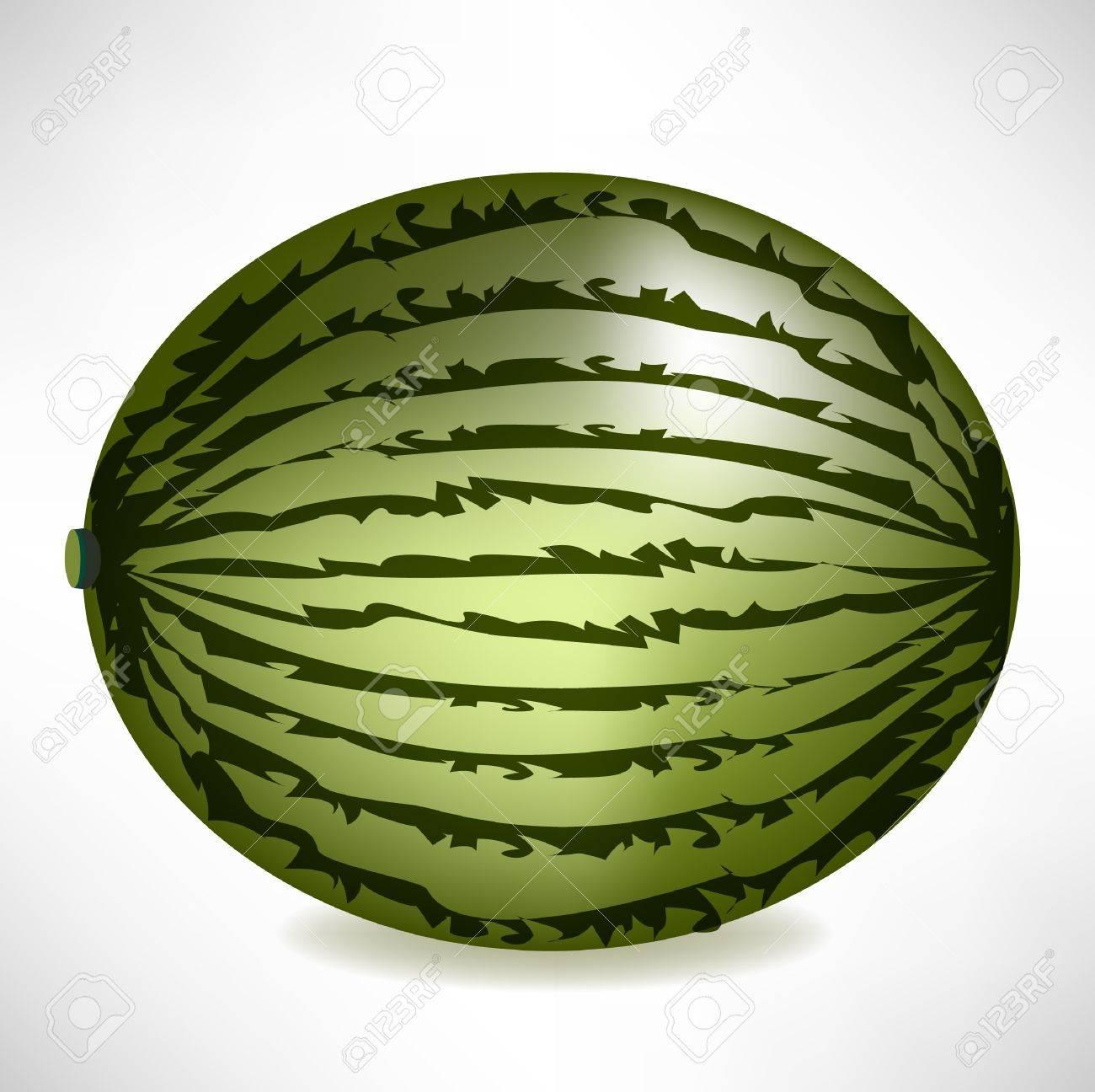 big realistic watermelon isolated Stock Vector - 10852109