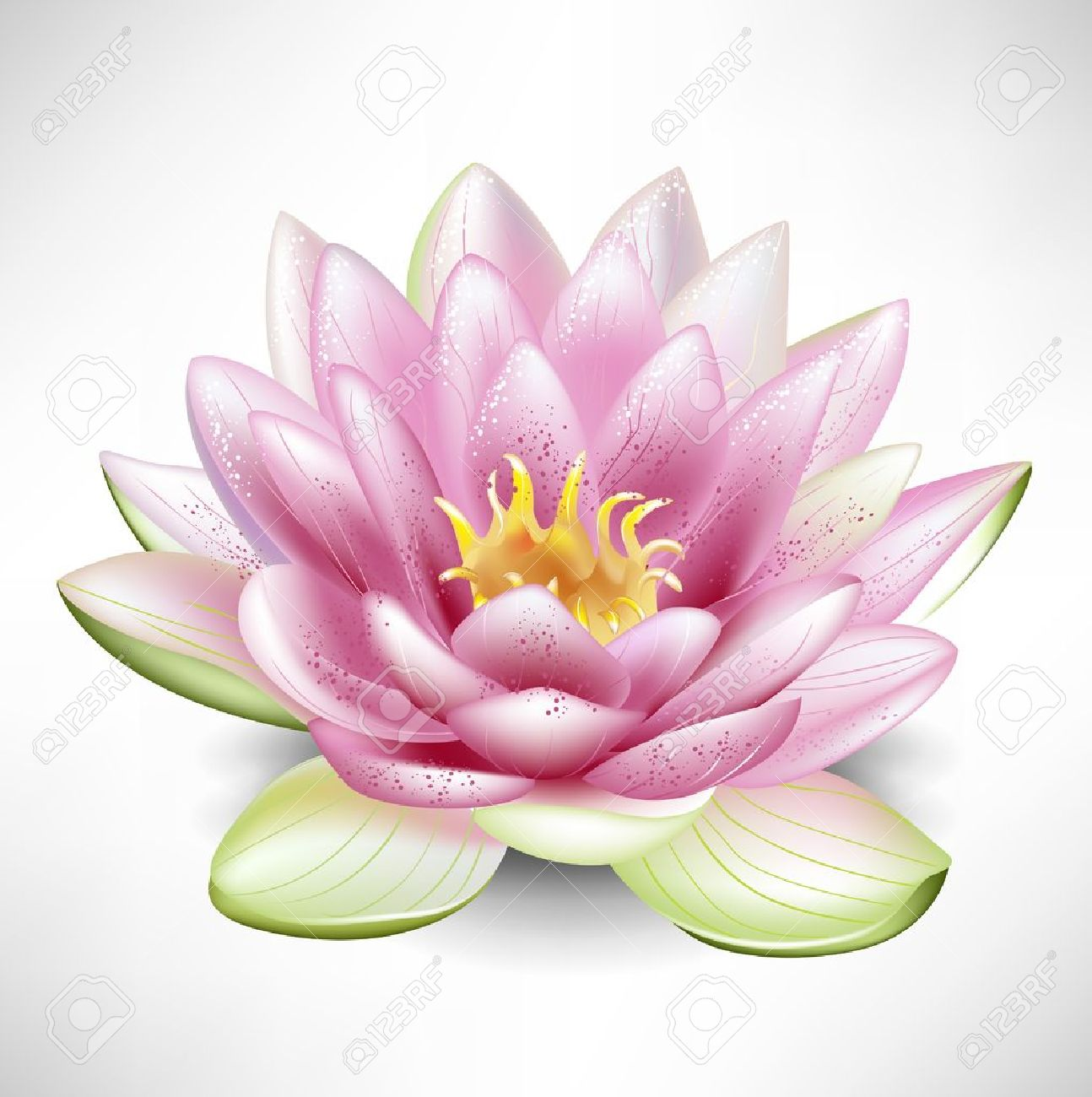 Single open blossoming lotus flower royalty free cliparts vectors single open blossoming lotus flower stock vector 10888454 izmirmasajfo Gallery