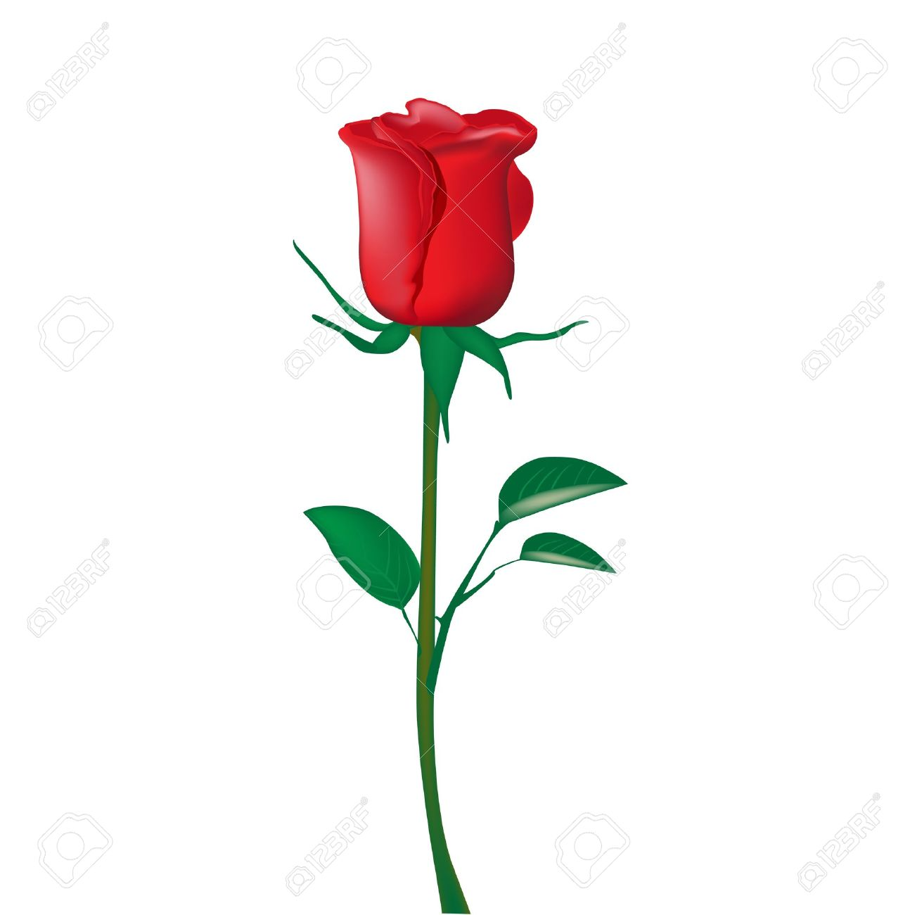 Single Red Rose Isolated On White Royalty Free Cliparts Vectors