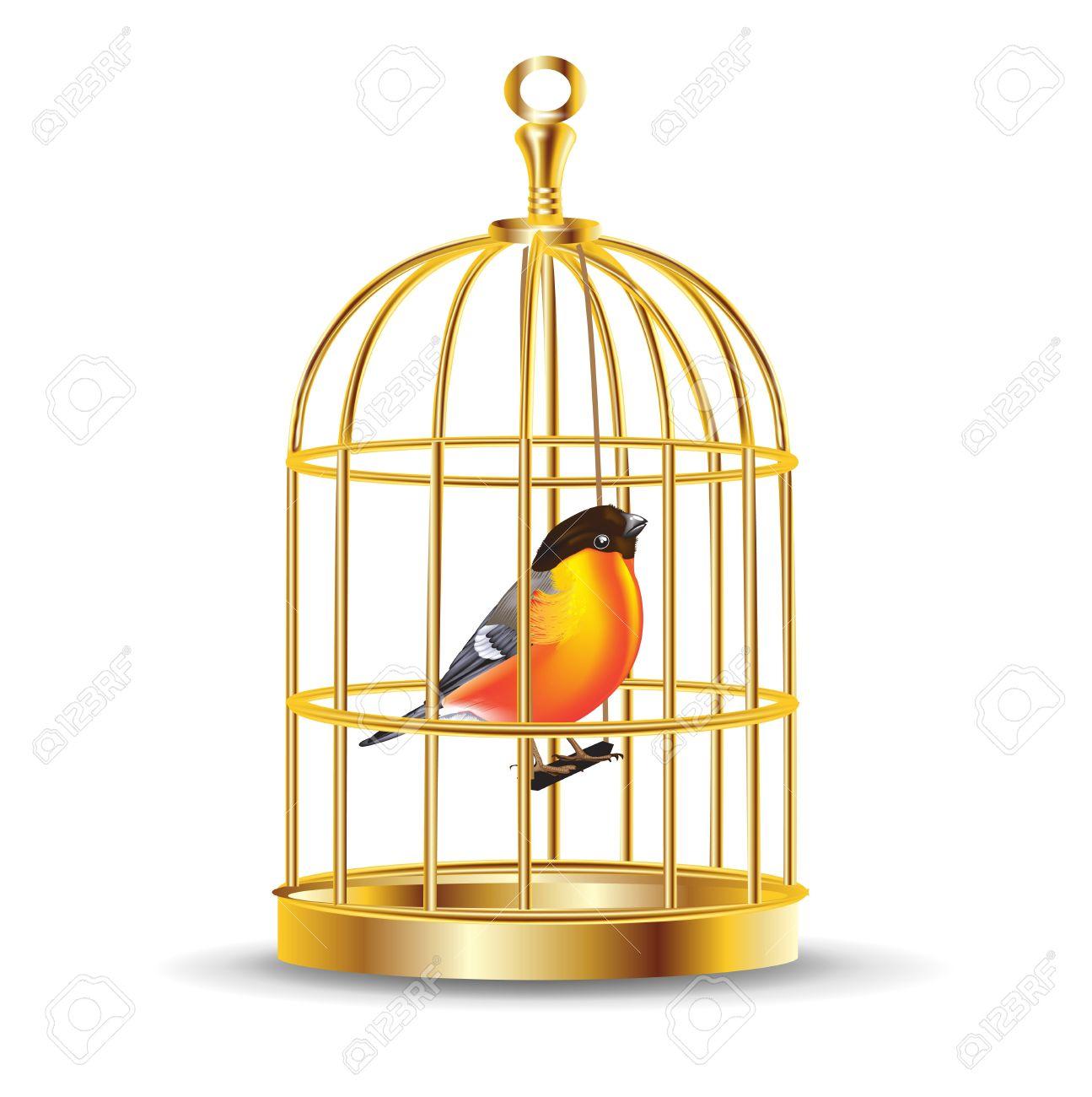 Kết quả hình ảnh cho a bird in a cage