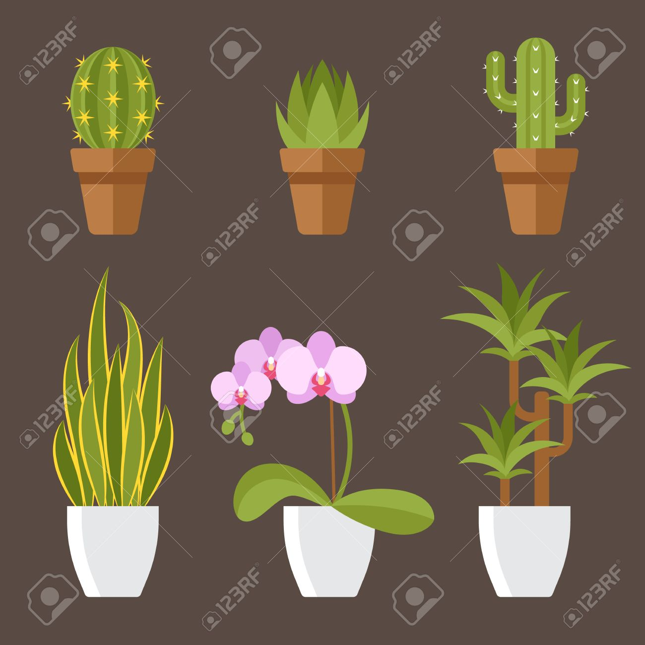 Vector   Vector Set Of Home Plants In Pots For Interior Decoration.  Cactuses, Aloe, Snake Plant, Orchid Flower, Dracaena. Flat Style.