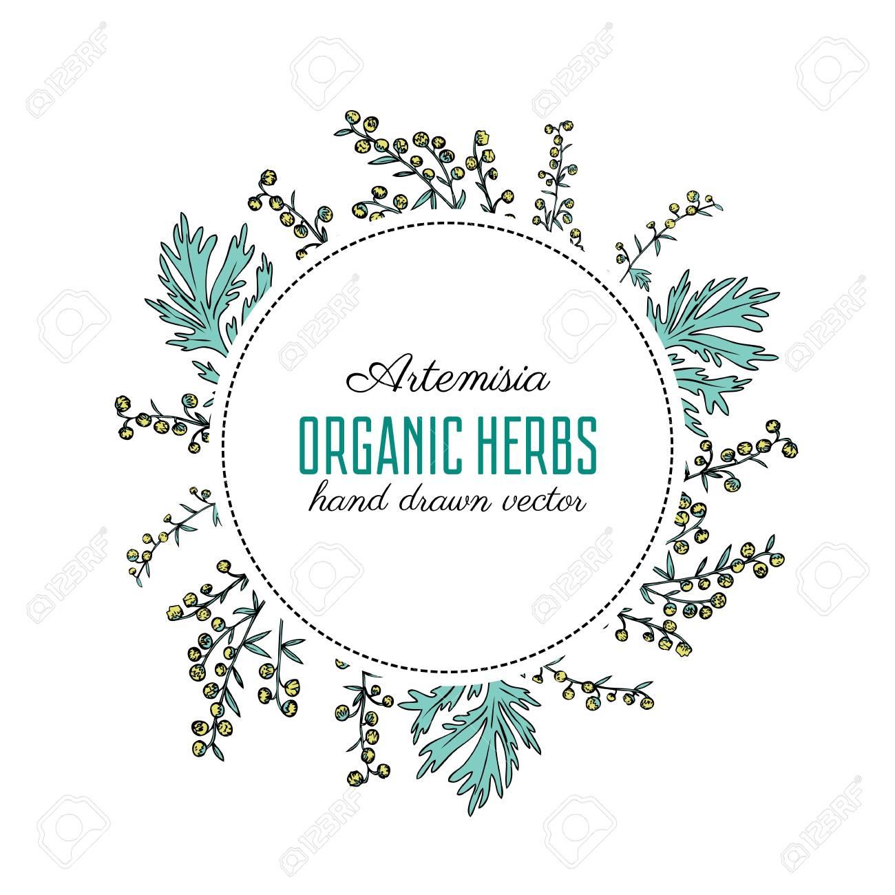 Round Frame With Artemisia Vulgaris Wreath Common Wormwood Hand