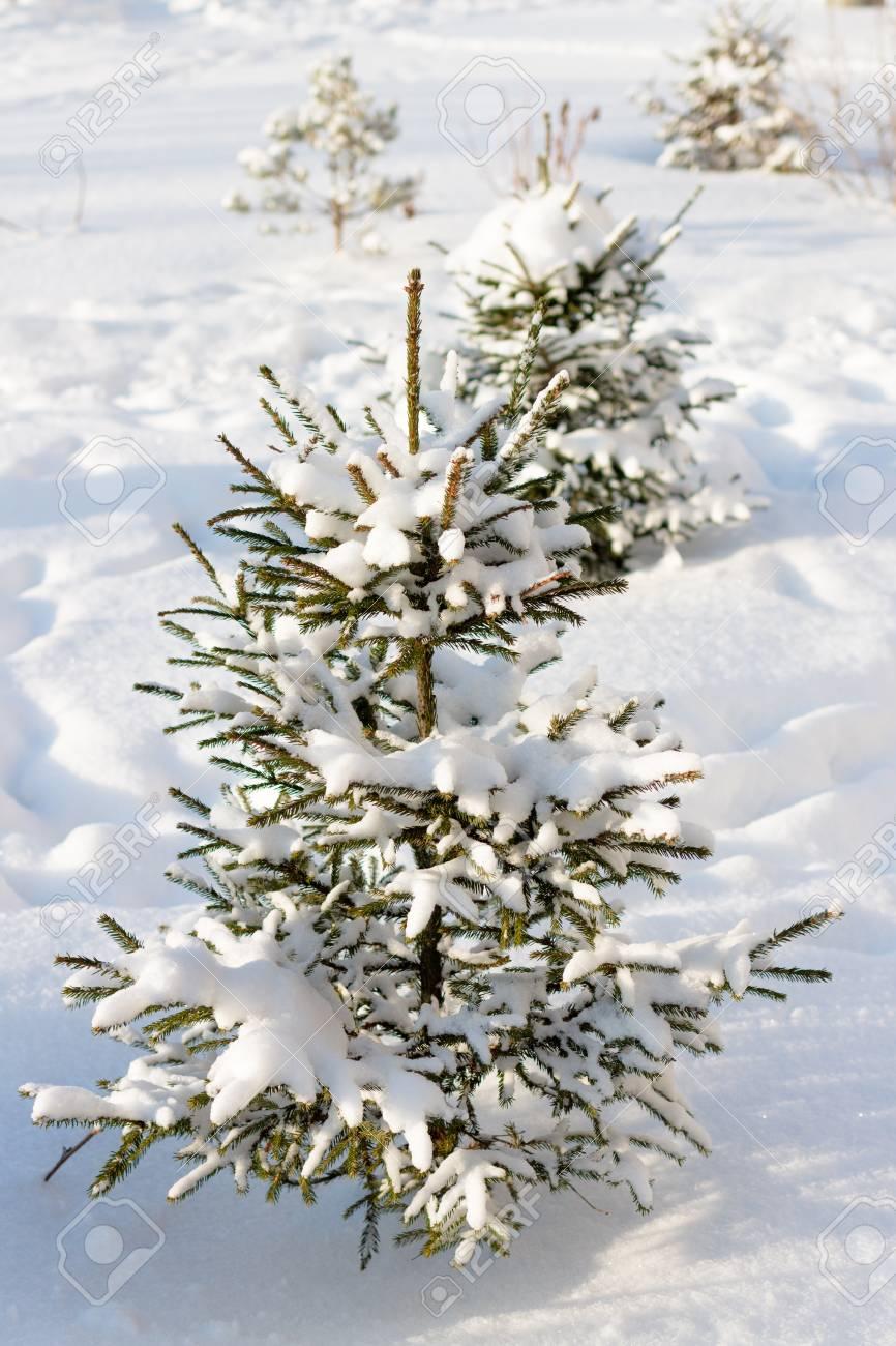 Kleiner weihnachtsbaum mit schnee