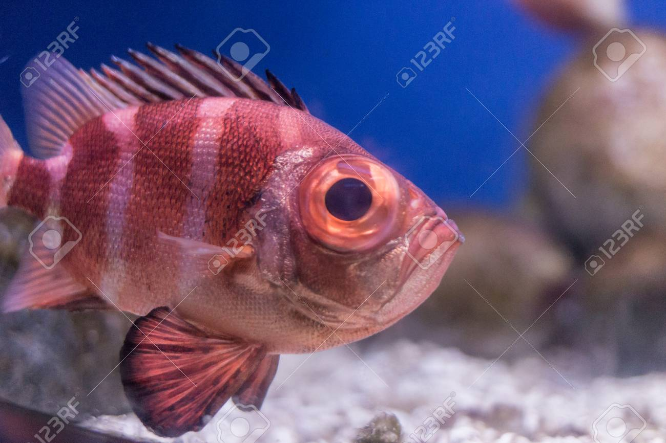 Exotic Fish. Underwater Image Of Colorful Fish. Colorful Fishes ...