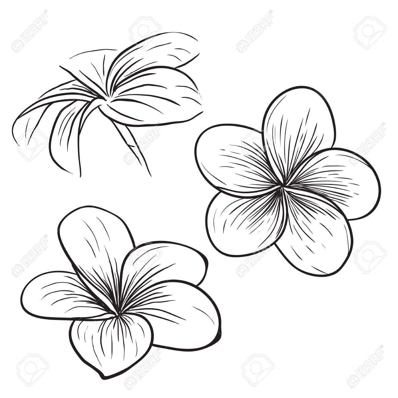 Tropical flower drawing geccetackletarts tropical flower drawing mightylinksfo