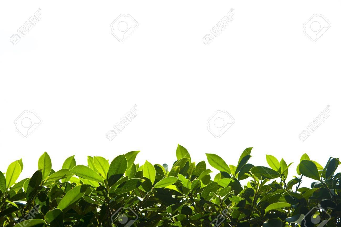Green nature foliage border down   field Stock Photo - 13139346
