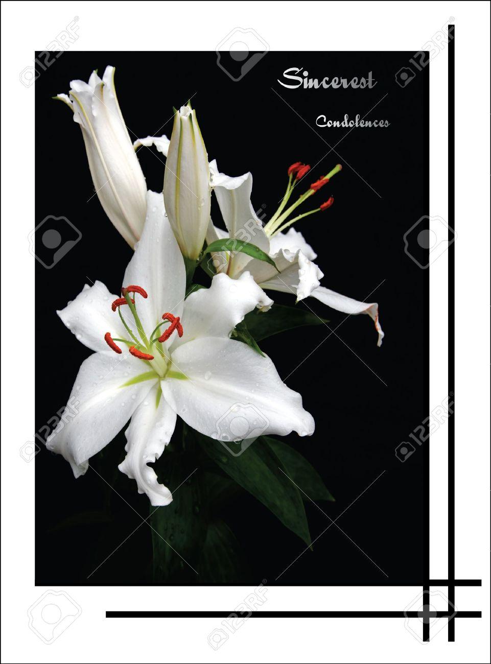 lily condolence card - 15856599