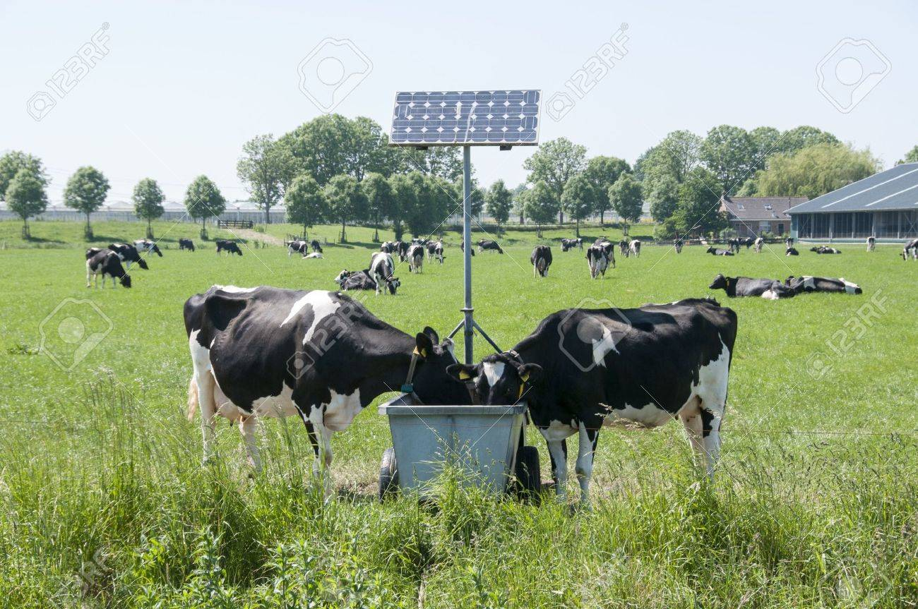 cows drinking with sun energy pannels for heating - 22085792