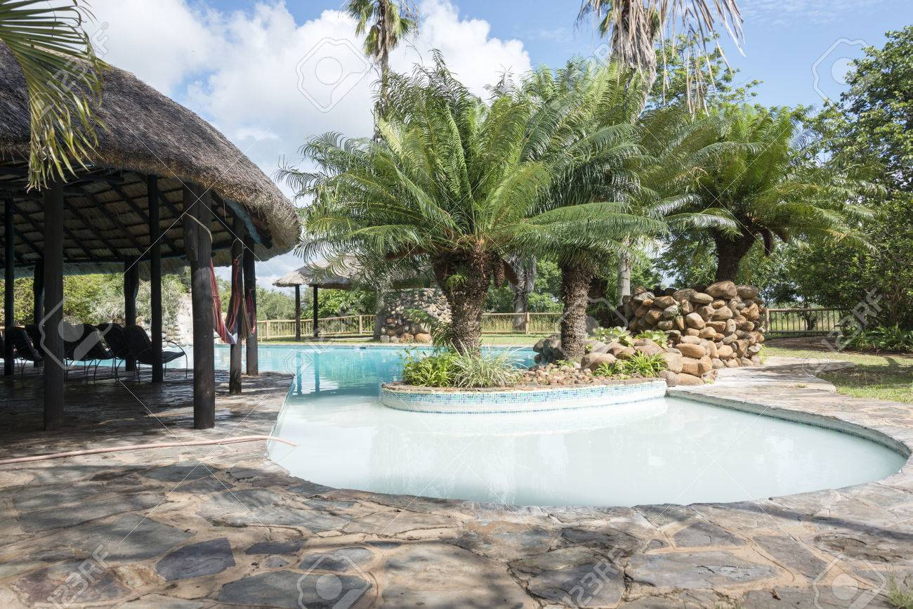 Tropical Swimming Pool With Palm Trees In Lodge South Africa Stock ...