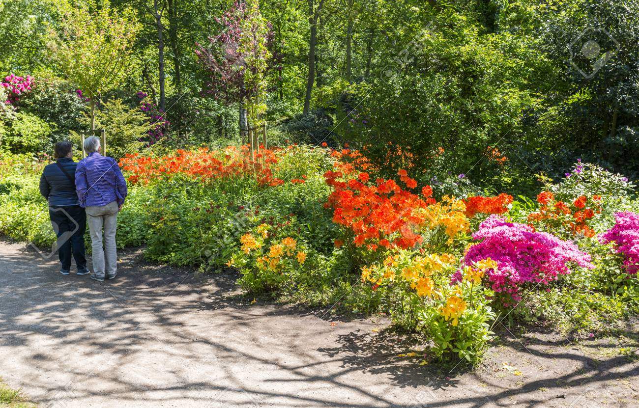 Flowers In English Garden In Holland Stock Photo Picture And
