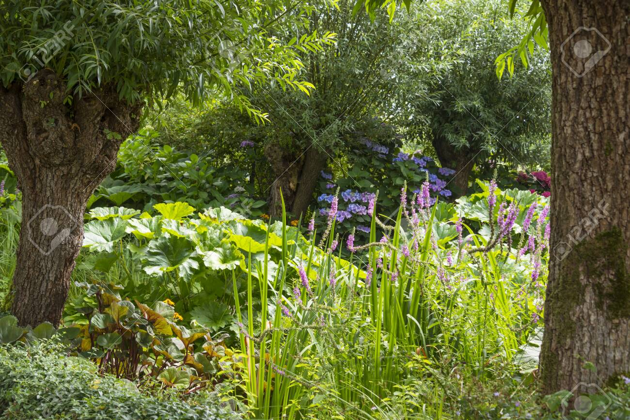 Large Garden With Flowering Plants And Flowers Between Two Pollard