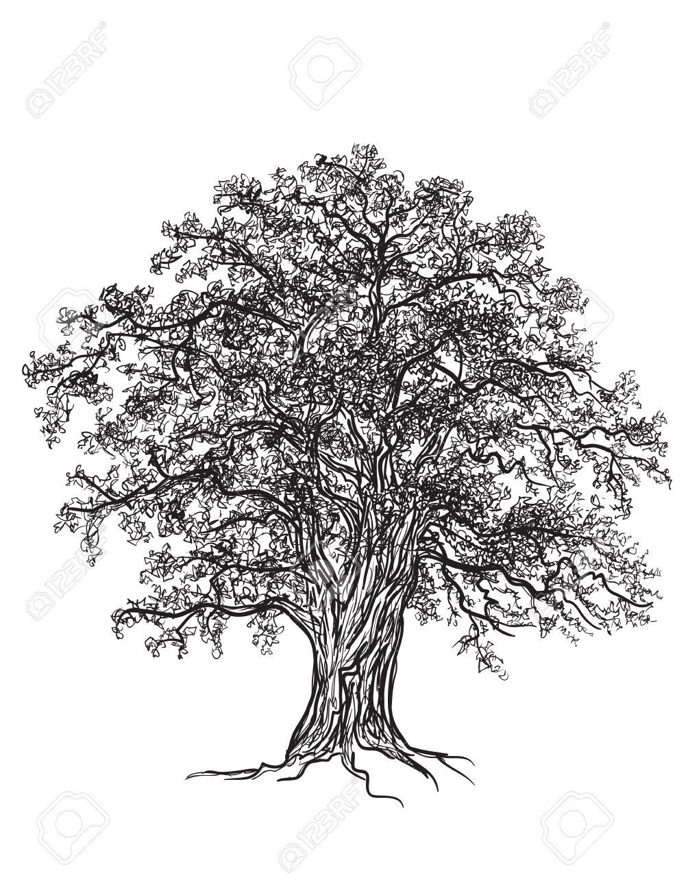 Schwarz Weiß Eiche Mit Blättern Mit Illustrator Gezeichnet