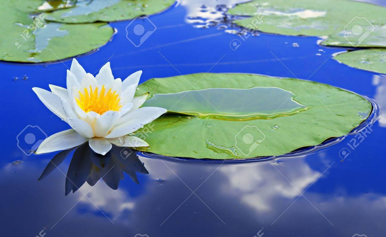Risultati immagini per foglia sul lago