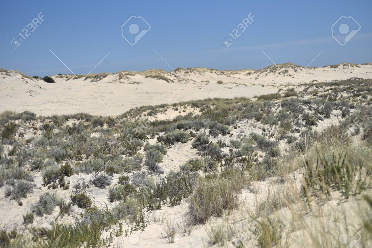 Donana National Park in Andalusia, Spain - 105505024