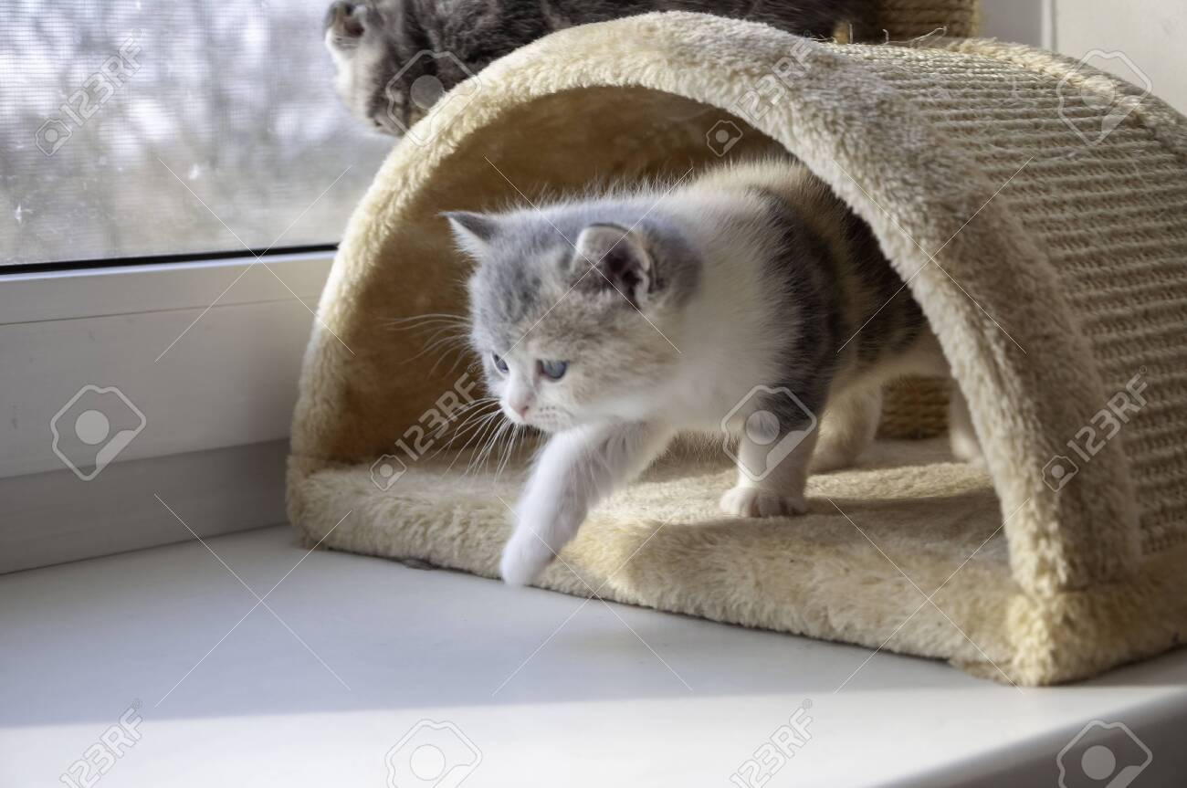 scared little kitten isolated over white background - 151338458