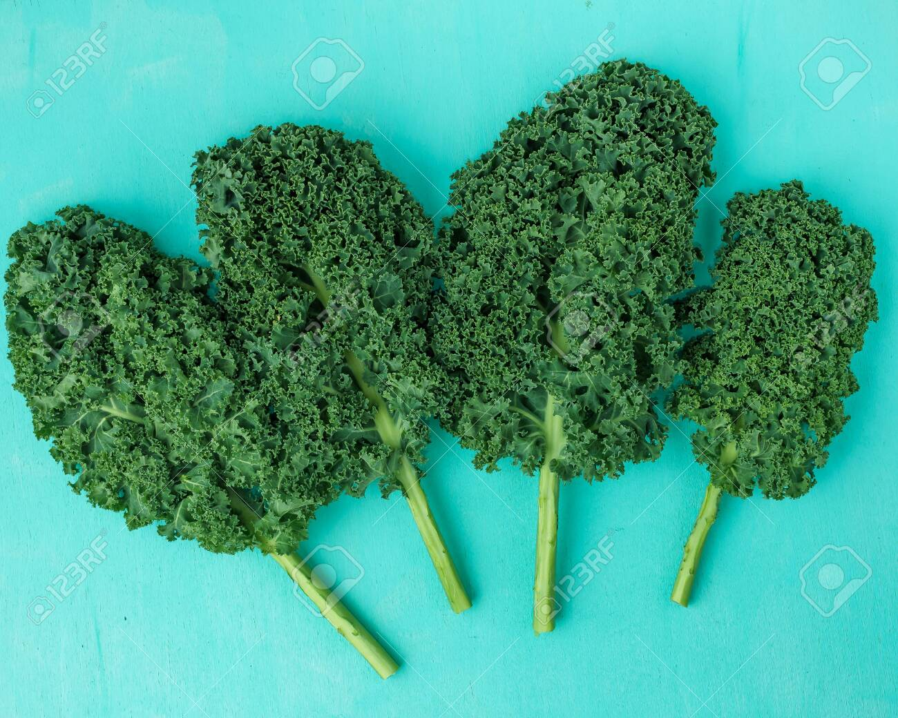 Kalegreen leaves curly kale, pattern, top view, flat lay - 151865773