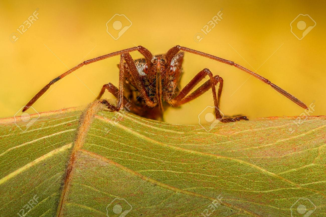Extreme Magnification - Stink Bug On A Leaf Stock Photo, Picture And ...