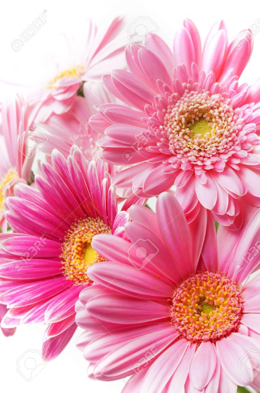 bouquet of pink gerbera flowers Stock Photo - 15836706