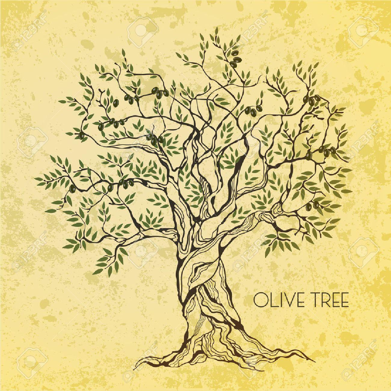 Olive tree on vintage paper - 40858716