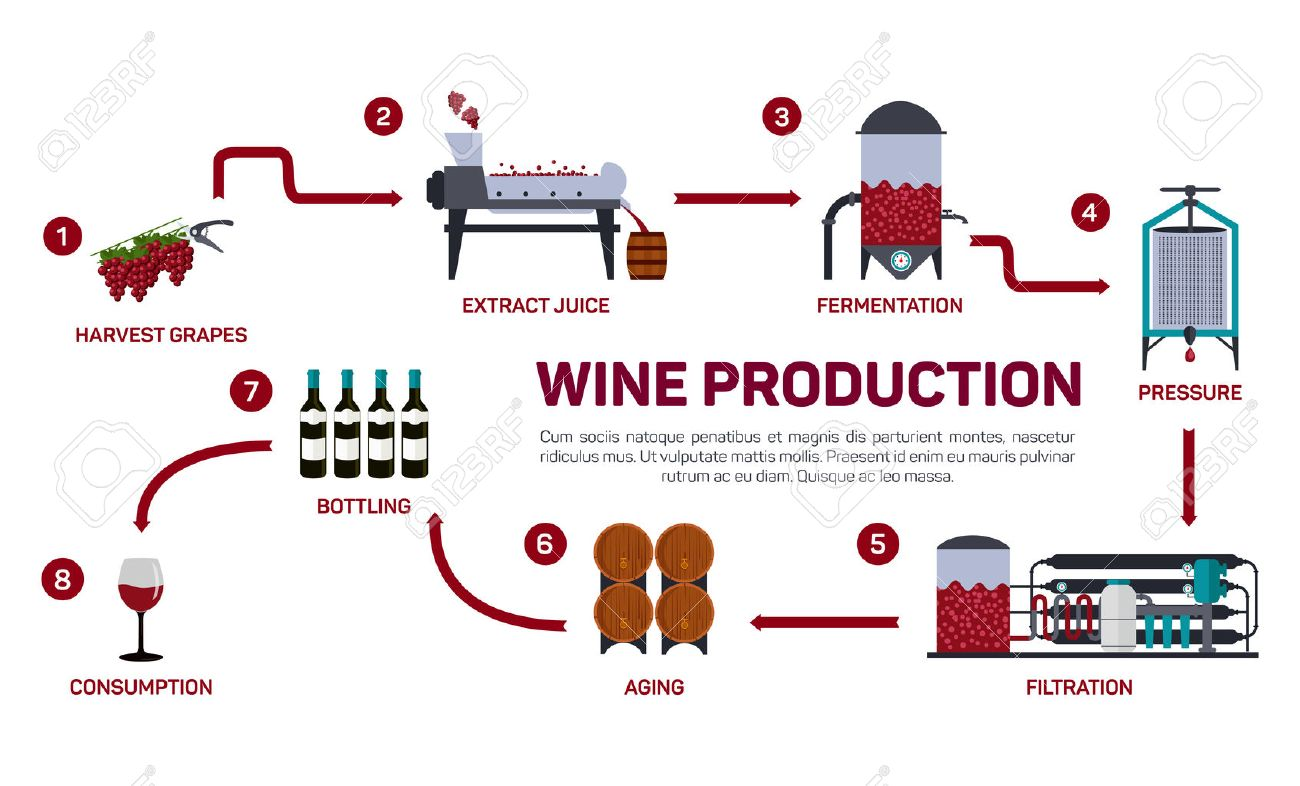 Risultati immagini per produzione del vino