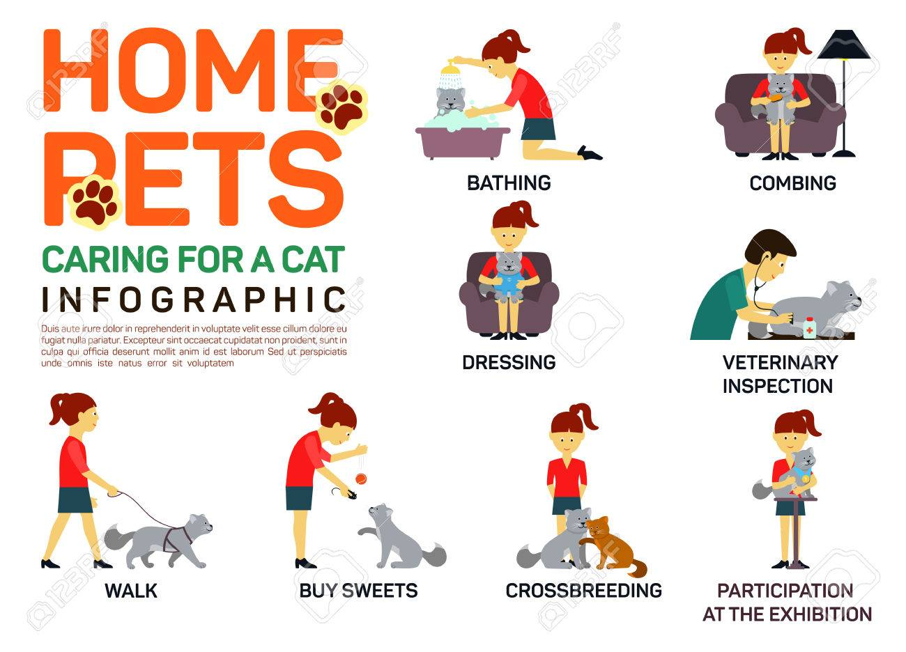 Vector flat illustration infographic of caring about pets cat. - 53247260
