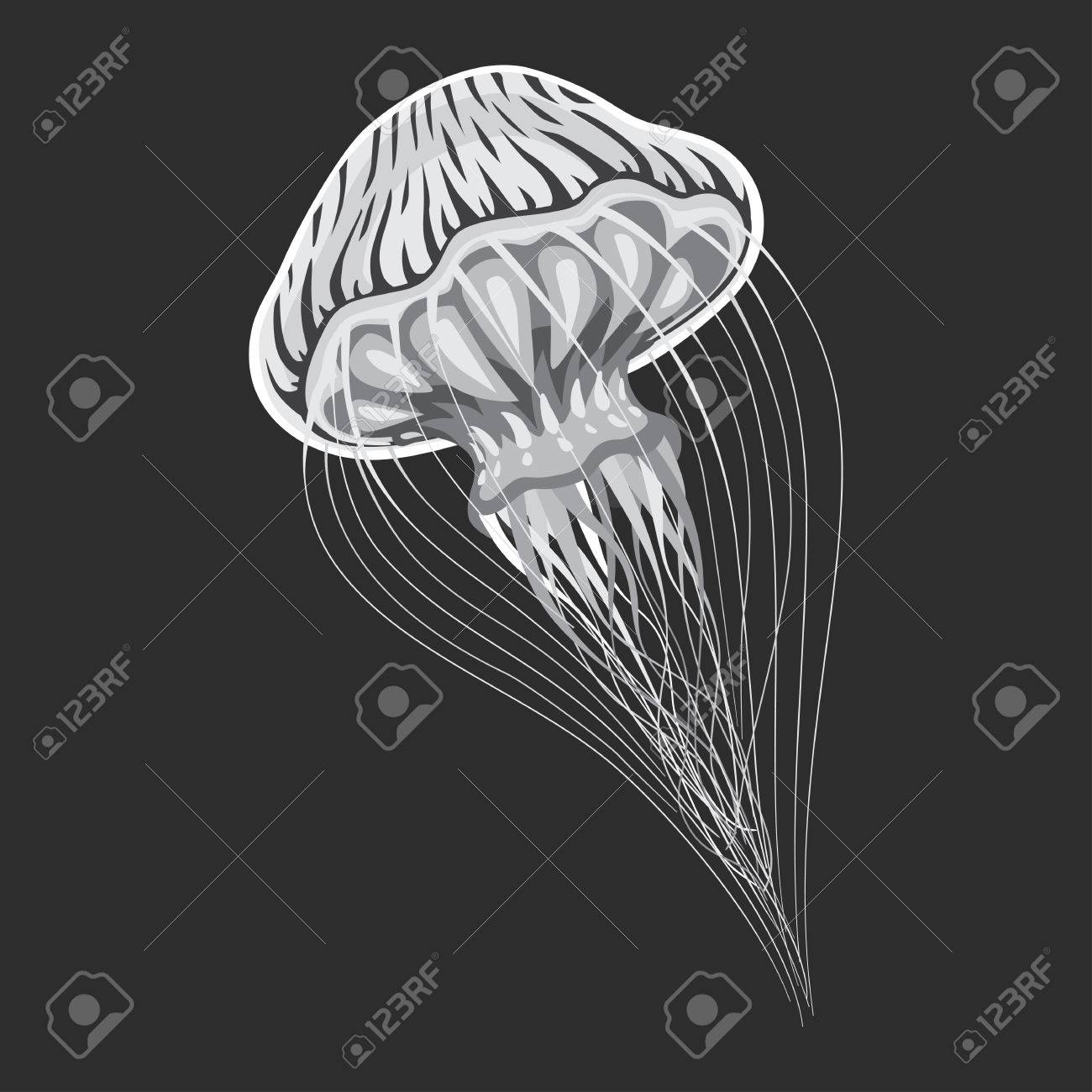 Sea or ocean stripping medusa or jellyfish, blubber or jellies