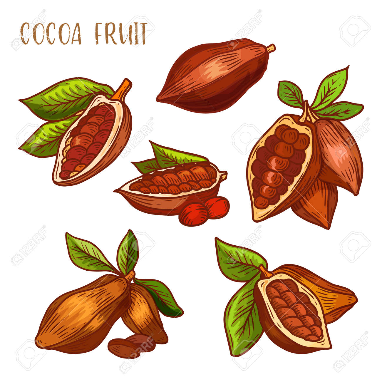 Cocoa beans, cacao pods, chocolate ingredients, vector isolated icons. Natural cocoa beans and cacao pods, whole and peeled with seeds, chocolate or sweet butter elements, sketch line - 145633529