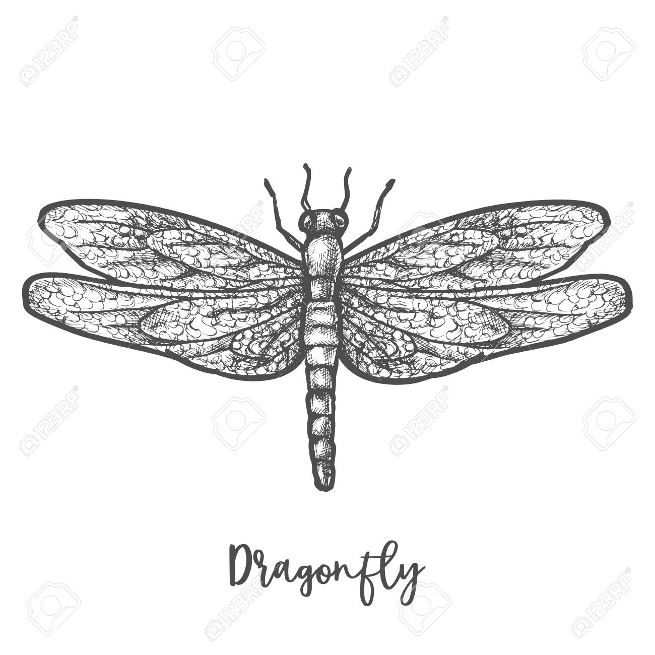Engraved dragonfly or flying insect sketch vector - 150406367