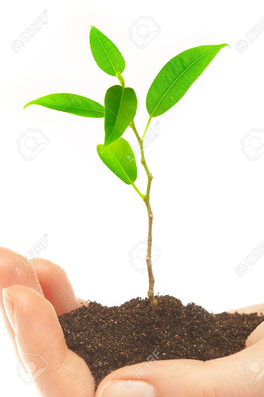 Human hands hold and preserve a young plant Stock Photo - 1482191