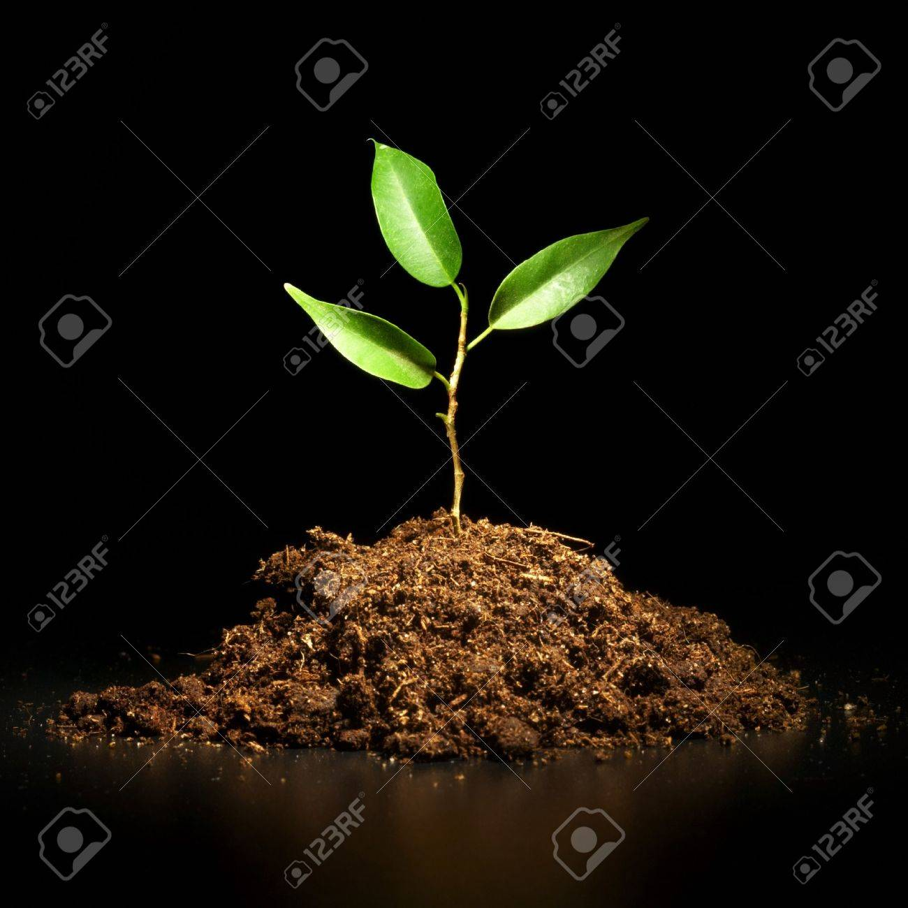 Young sprout on a black background... Stock Photo - 4193522