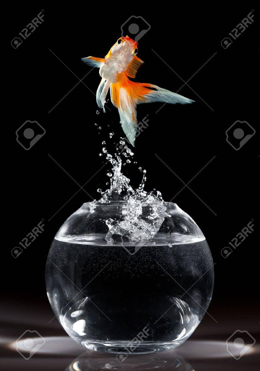goldfish jumps upwards from an aquarium on a dark background - 7790509