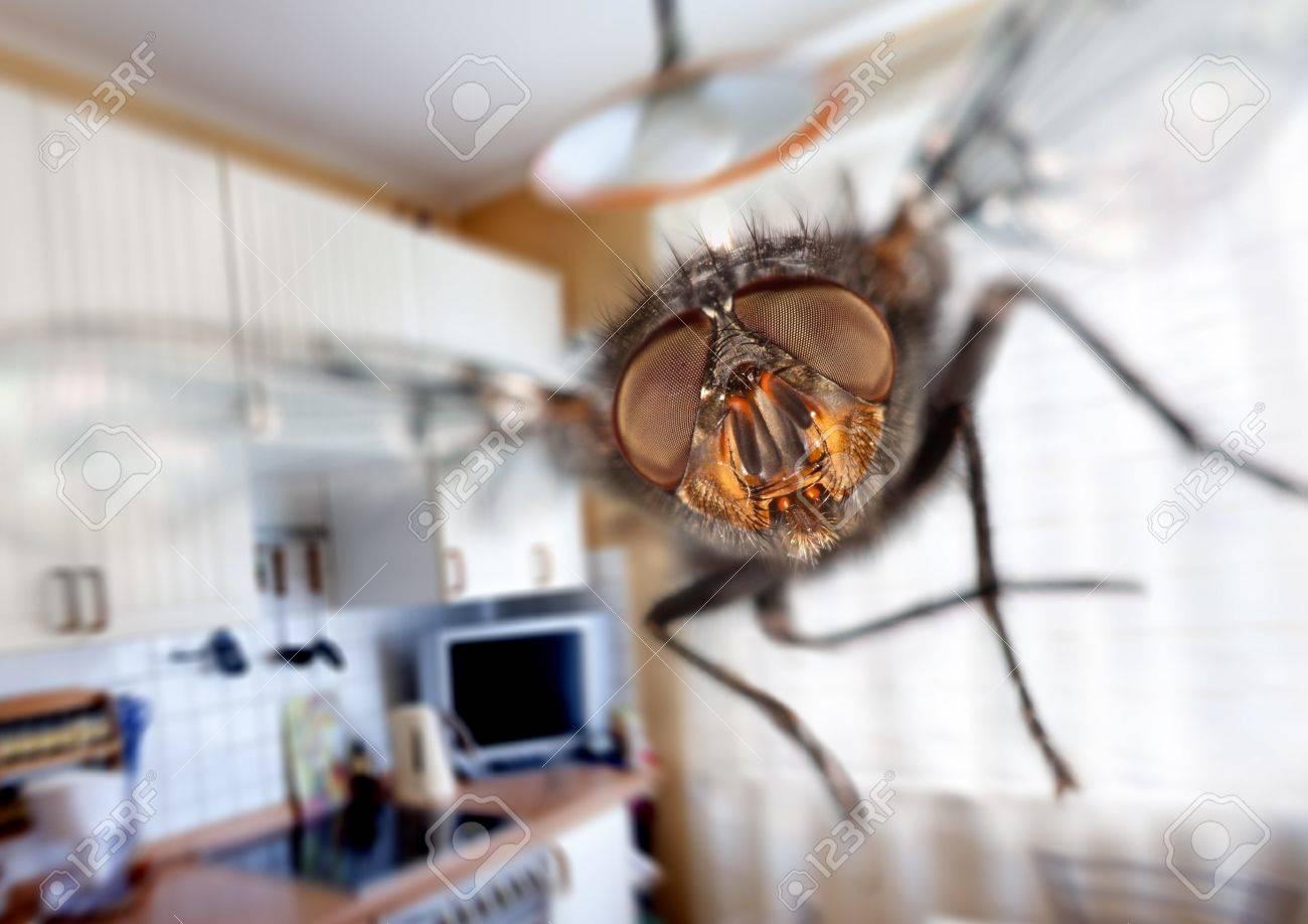 Fliegen In Der Küche | Stubenfliege Nahaufnahme Fliegen In Der Kuche Lizenzfreie Fotos