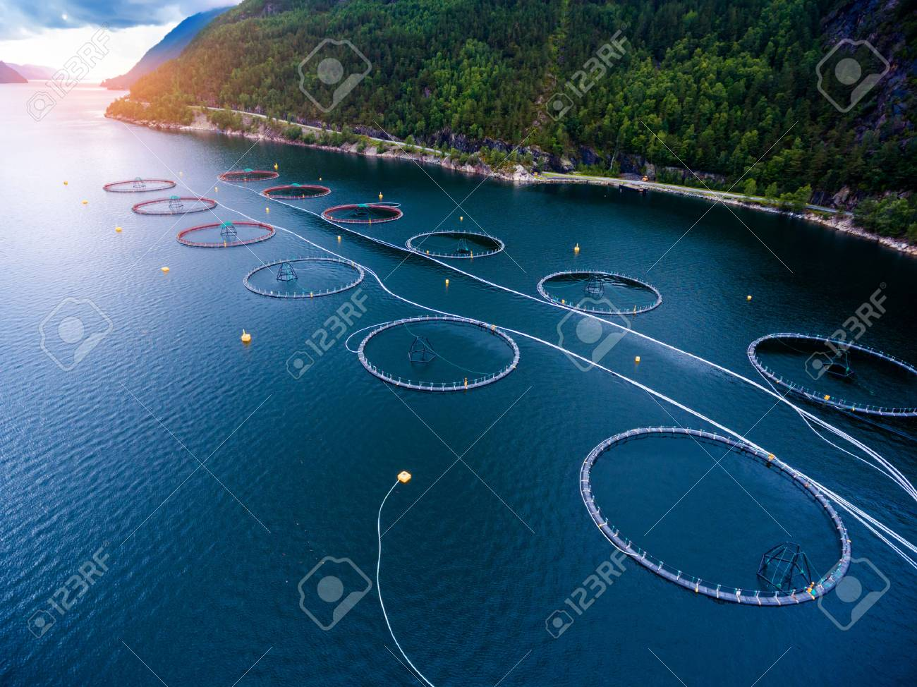 Farm salmon fishing in Norway aerial photography. - 70372418