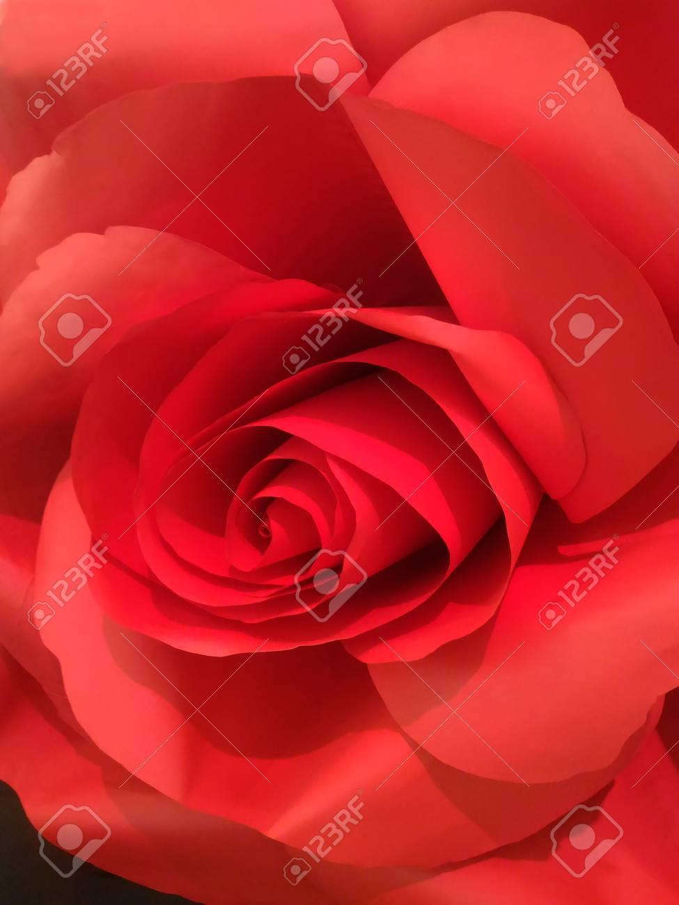 Close Up Of Artificial Red Rose Made By Paper Stock Photo Picture