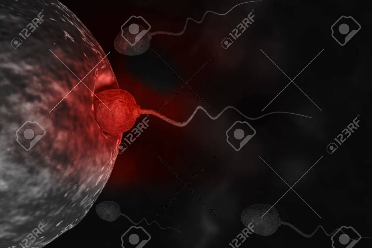 Sperm cells trying to reach an human ovum. Stock Photo - 10919938