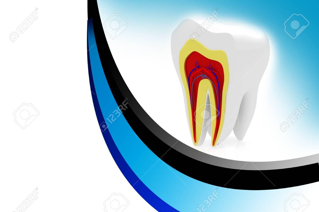 cross section of teeth Stock Photo - 14498742