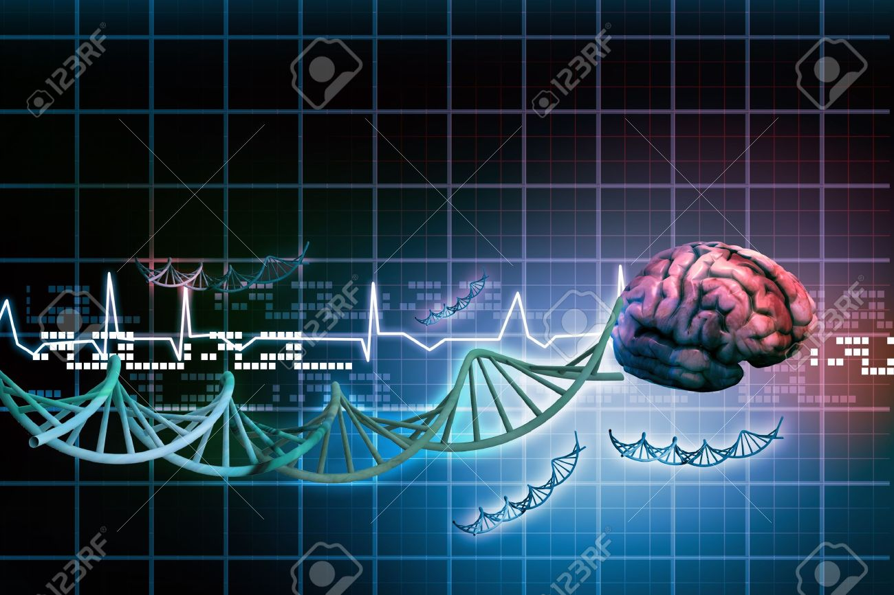 Human brain Stock Photo - 15403366