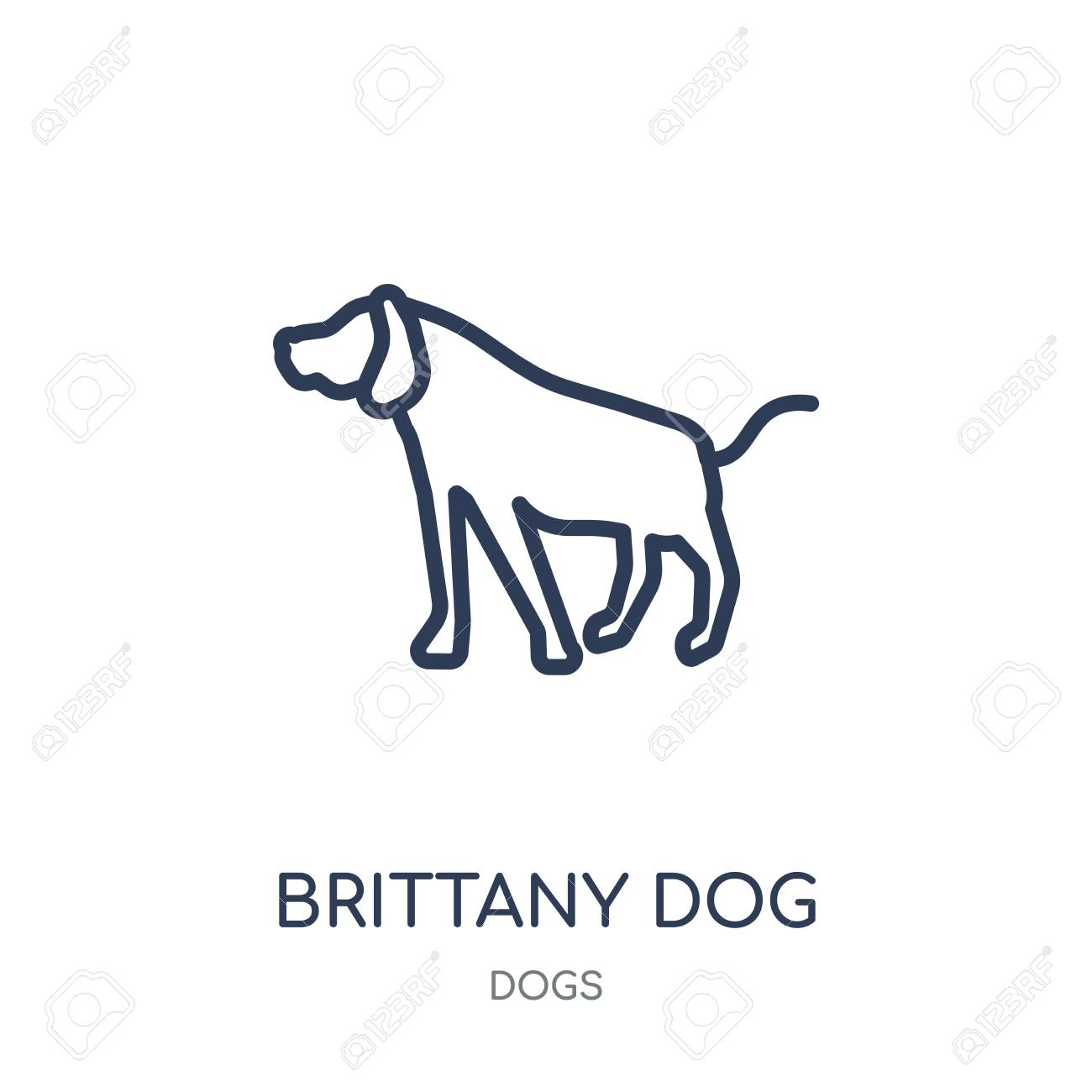 brittany dog icon brittany dog linear symbol design from dogs
