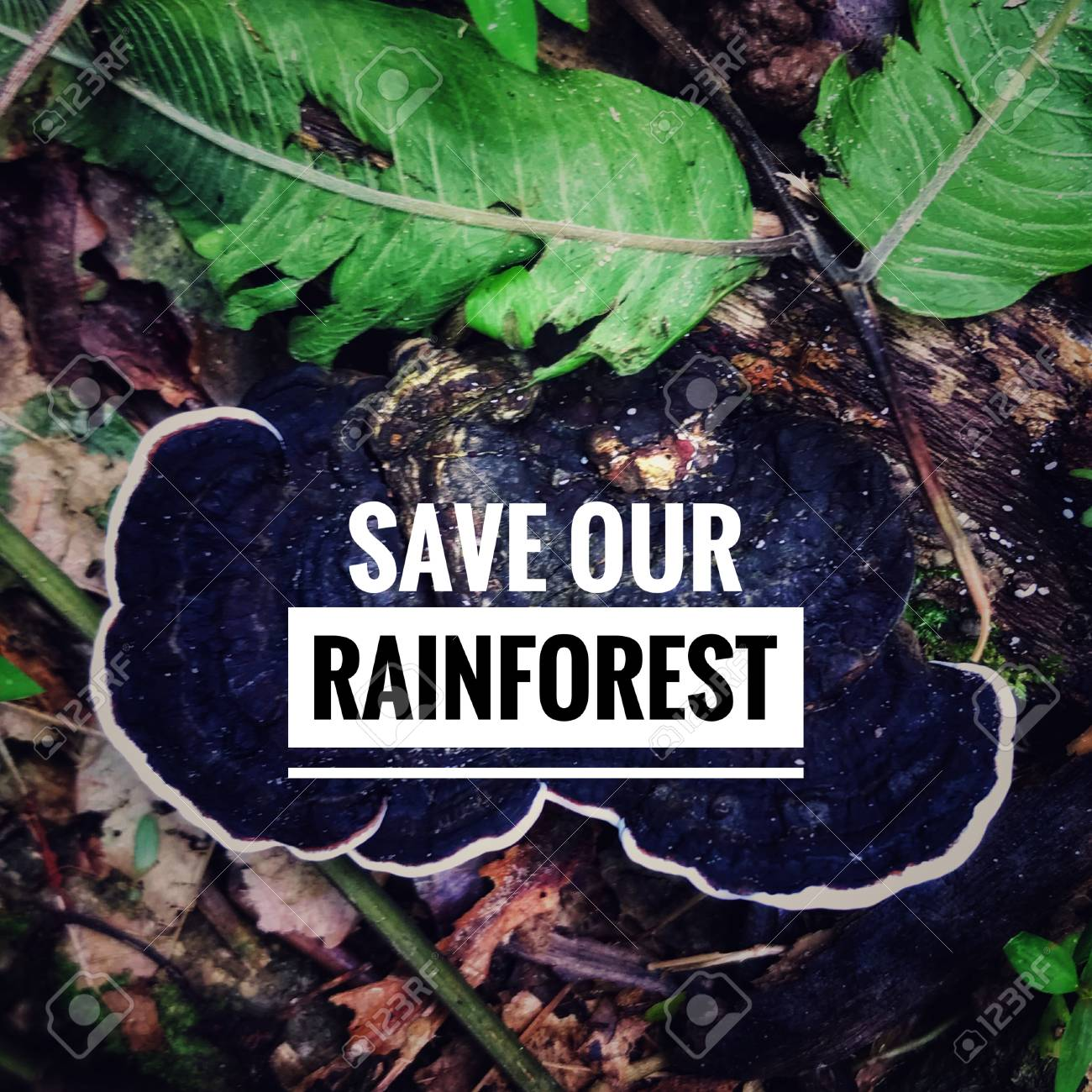 inspirational quote save our rainforest vintage styled