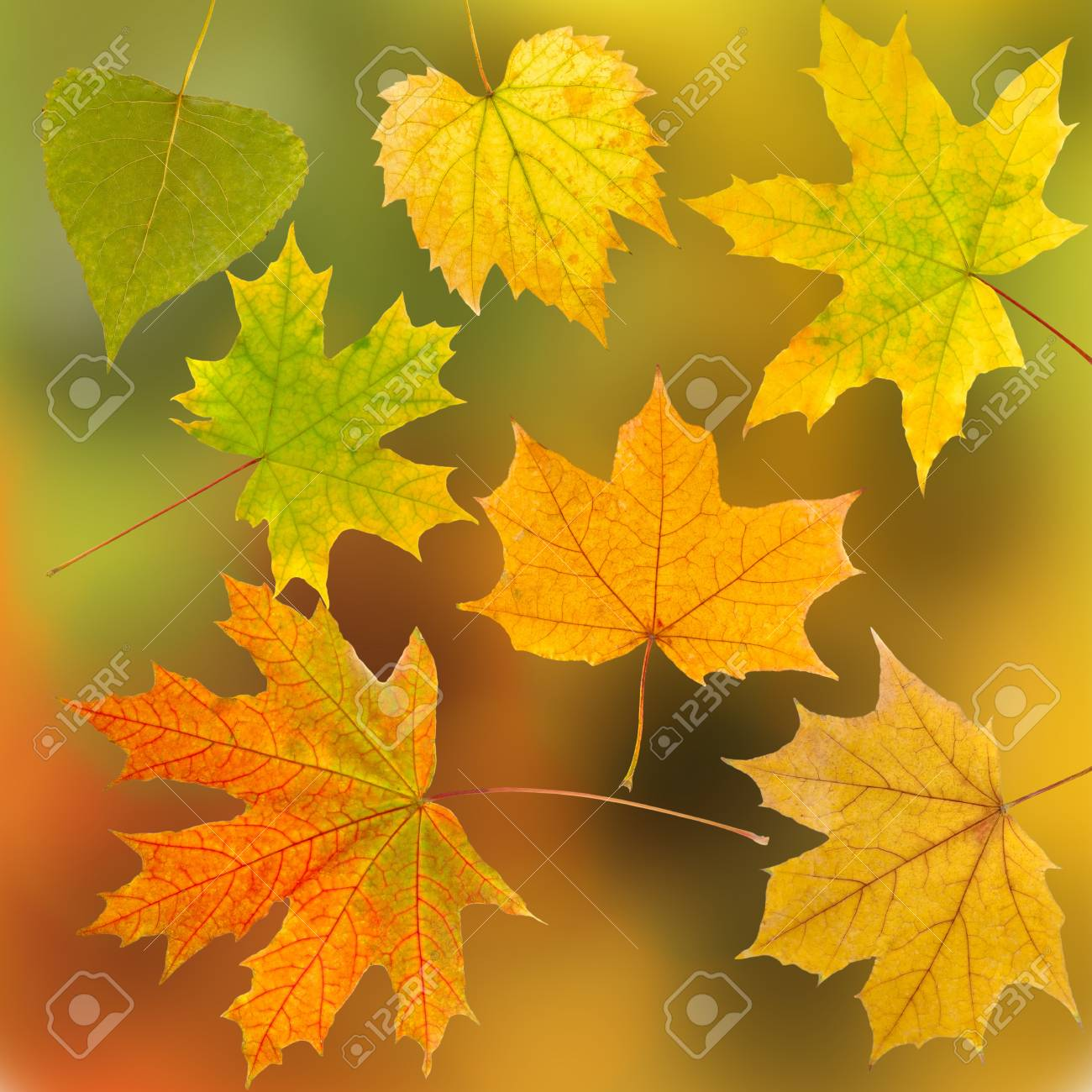 image of autumn leaves as a background Stock Photo - 20583379