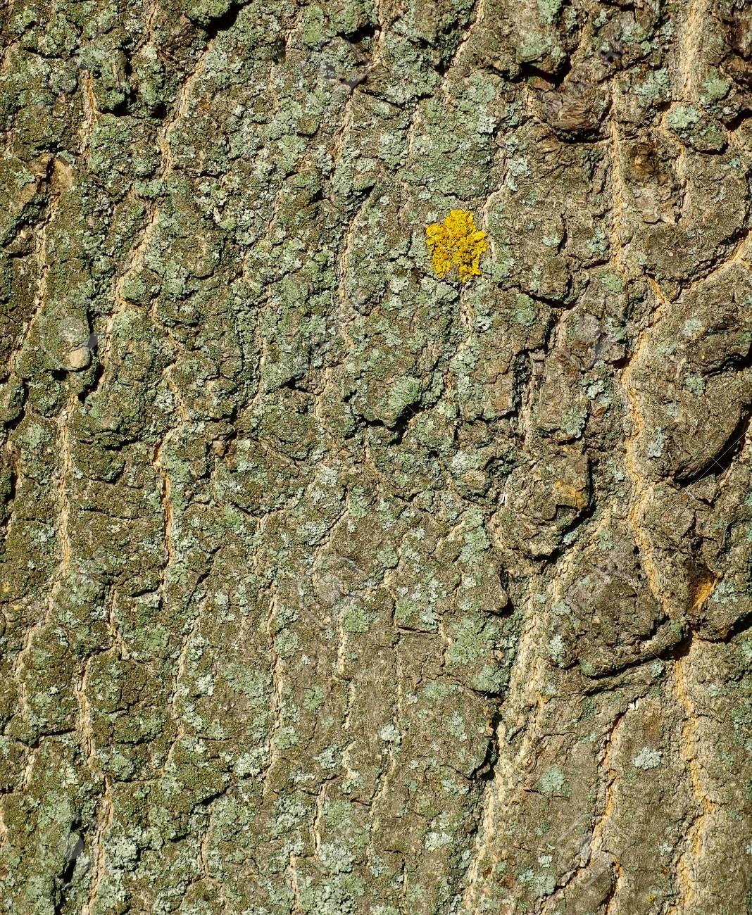 Image oak bark as a background Stock Photo - 20583375