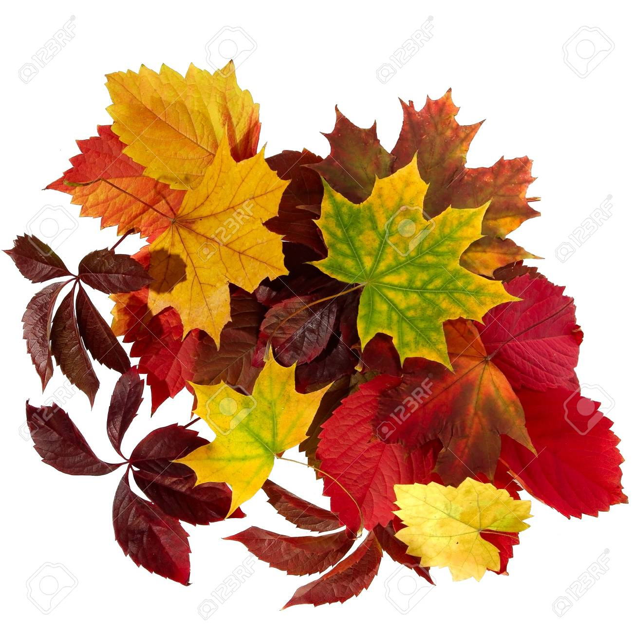 Isolated image collage from leaves Stock Photo - 20582790