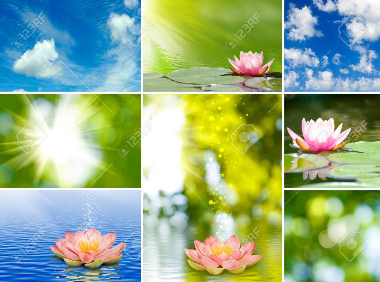 Image of different beautiful flowers stock photo picture and image of different beautiful flowers stock photo 33921648 izmirmasajfo