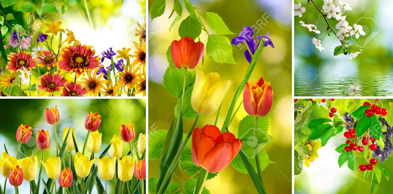 Different beautiful flowers in a park closeup stock photo picture different beautiful flowers in a park closeup stock photo 42242082 izmirmasajfo
