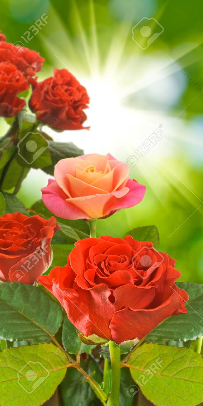 Image of beautiful flowers on blurred background closeup stock photo image of beautiful flowers on blurred background closeup stock photo 42248862 izmirmasajfo
