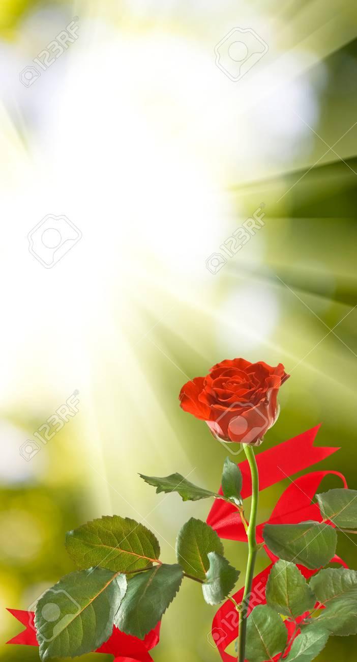 Hermosas Flores Sobre Un Fondo Verde Muchas Flores Hermosas Rosas